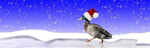 戴圣诞老人帽子的鸭子 库存照片