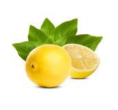 水多的新鲜的柠檬。 库存照片