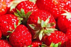 水多的红色草莓 库存照片