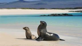 婴孩与他的妈妈的海狮海滩的 免版税库存照片