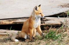 婴孩小室在红色附近的狐狸工具箱 图库摄影