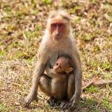 婴孩帽子短尾猿母亲 库存图片