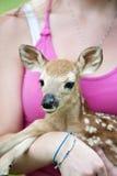 婴孩特写镜头小鹿 免版税库存照片