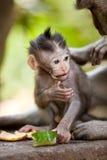 婴孩逗人喜爱的小的猴子 库存照片