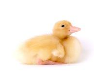 婴孩逗人喜爱的鸭子 库存图片