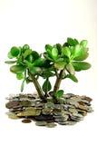 货币结构树 库存图片