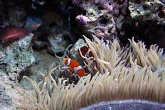 水族馆珊瑚钓鱼海军陆战队员 免版税库存照片