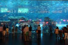水族馆迪拜购物中心 库存照片