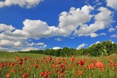 晴朗日绿色草甸的春天 免版税库存照片