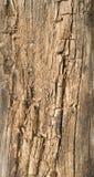 破烂的木头 免版税库存图片