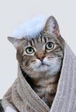浴猫 免版税库存照片