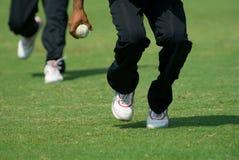 整理球的玩板球者 免版税库存照片