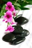 紫红色微型兰花石头疗法 免版税库存照片