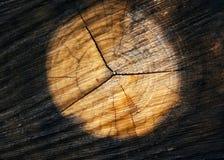 阴级射线示波器部分结构树 免版税库存图片