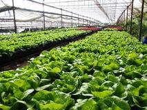 水耕的农场 免版税库存照片
