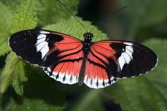 蝴蝶关键钢琴 库存照片