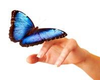 蝴蝶在手边。 免版税库存图片