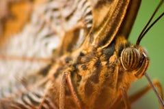 蝴蝶眼睛宏指令 免版税图库摄影