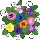 蝴蝶花花束 库存照片