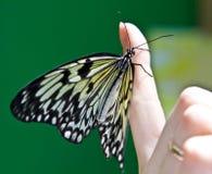 蝴蝶龙纸张米 库存照片