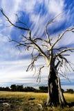 破裂的老结构树 免版税库存照片