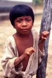 巴西的儿童当地印地安人 库存图片