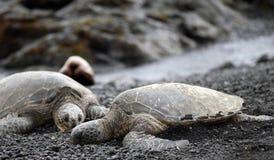 伴随绿色松弛海龟 免版税库存图片