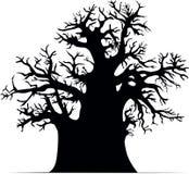 猴面包树结构树 免版税库存照片