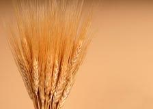 轴麦子 免版税库存照片
