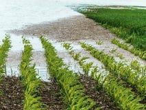 洪水2013年 免版税库存图片