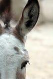 驴头 免版税图库摄影