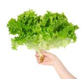 0 салатов jpg руки Стоковая Фотография