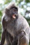 0 πίθηκος Στοκ Εικόνες