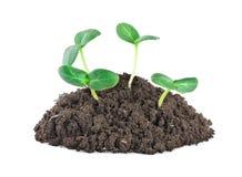 0 gröna jpg planterar barn Arkivfoton
