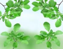 (0) pięknych zielonych jpg liść wiosna Zdjęcie Stock