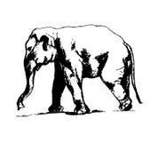 在黑白00的大象 库存照片