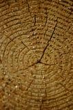 00 drzewo Fotografia Stock