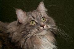 001猫 库存照片