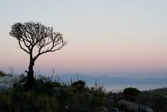 001 drzewo Fotografia Stock