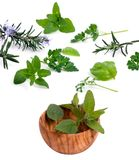 001 herbs Στοκ εικόνα με δικαίωμα ελεύθερης χρήσης