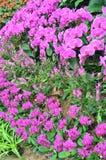 001 kwiat Fotografia Royalty Free