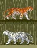 001 tygrys Obraz Stock