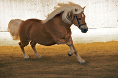 0014 koń Obrazy Stock