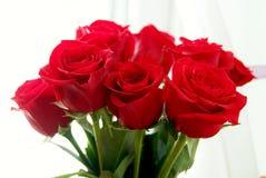 003朵玫瑰 免版税库存照片