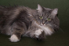 003猫 免版税图库摄影
