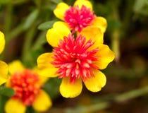 003 kwiat Zdjęcia Stock