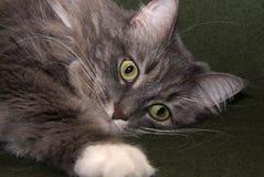 004猫 免版税库存照片