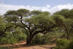 004非洲横向 免版税图库摄影