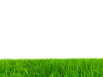 004 (a) grass at 9000 without sky.jpg Stock Images
