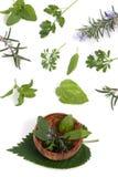 004 herbs Στοκ φωτογραφίες με δικαίωμα ελεύθερης χρήσης